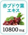 赤ブドウ葉エキスの画像