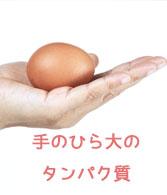 手のひら大のタンパク質の画像