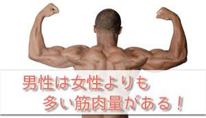 男性の筋肉量の画像