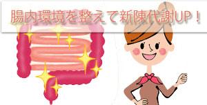 乳酸菌で腸内環境を整えよう